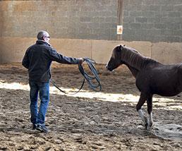 Accompagnement assisté par le cheval